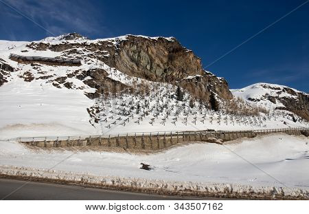 Small Fir Trees Planted As Natural Avalanche Protection Up The Road To The Julier Pass.