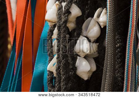 White Conch In Black Colored Coir Rope To Decorate Cattle On Pongal Festival At Tamilnadu, India.