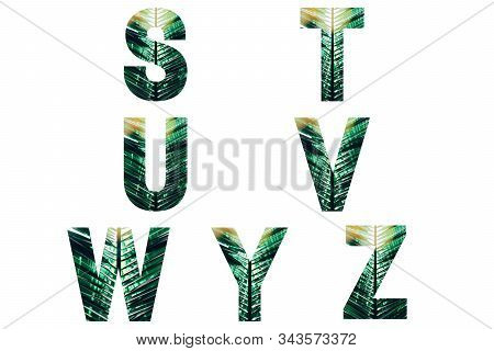 Wicker Font Alphabet S, T, U, V, W, Y, Z Made Of Fresh Green Palm Leaves With Sunlight.