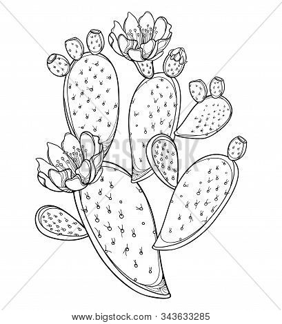 Vector Branch Of Outline Indian Fig Opuntia Or Prickly Pear Cactus, Fruit, Flower And Spiny Stem In