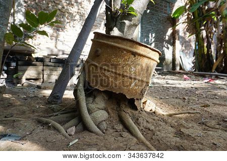 Plants Grow Through Rusty Pails, Old Rusty Bucket Hanging With A Handle On A Tree Bough At Spring Se