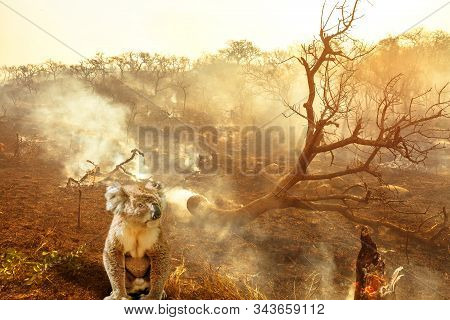 Composition About Australian Wildlife In Bushfires Of Australia In 2020. Koala With Fire On Backgrou