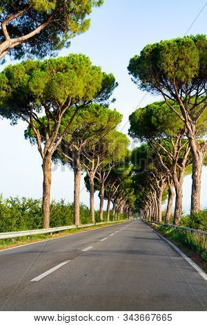 Scenic Driving On New Via Appia Road S7 With High Green  Mediterranean Pine Trees Connected Rome, La