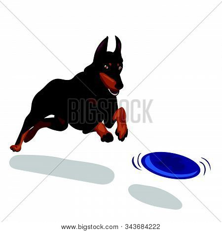 Dog Doberman With Blue Plate Isolated At The With Background