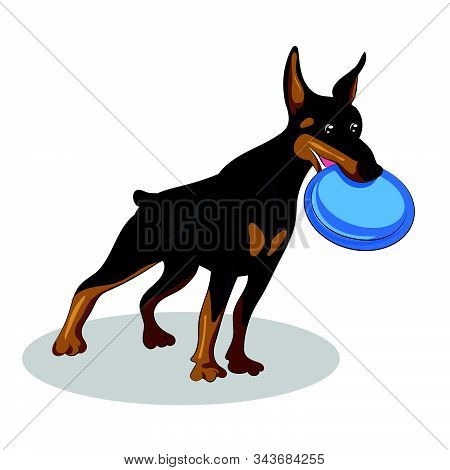 Dog Doberman With Blue Plate Isolated