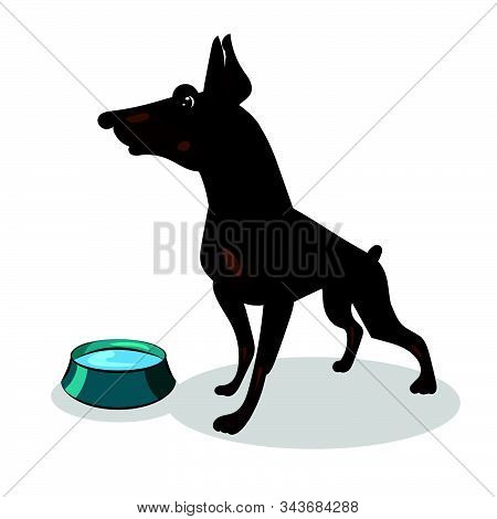 Doberman Dog Isolated At The White Background