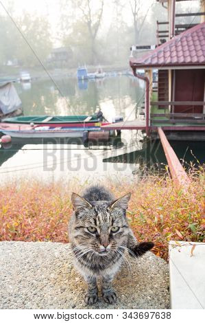 Stray Tabby Cat Sitting By The Quay Of The Tamis River In Pancevo, Serbia, During An Autumn Sunset.