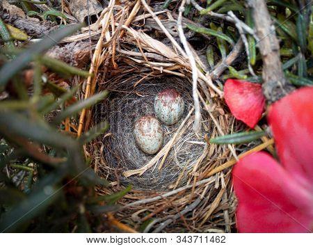 Nido De Pájaro Con Dos Huevos En Su Interior Rodeados De Plantas Y Ramas.