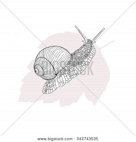 Monochrome Snail Illustration. A Black And White Snail On A Pink Leaf. Good For Flyers, Posters, Car