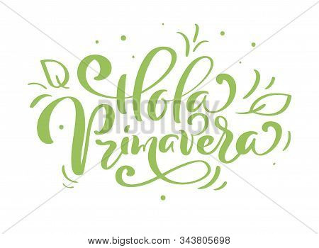 Hand Drawn Lettering Hola Primavera In Spanish. Hello Spring Vector Illustration. Spring Green Leave
