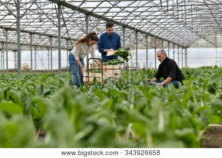 Farmer with apprentice working in greenhouse