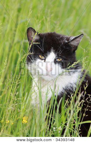White black cat on meadow