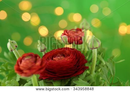 Ranunculus Red Close-up Bouquet Of Flowers On A Bright Green Background With Golden Bokeh. Fresh Red