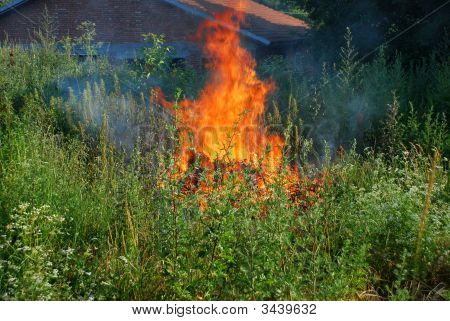 Fire In Green Grass