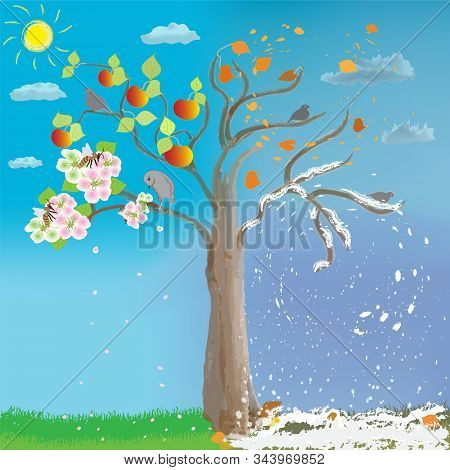 Apple Tree In Four Seasons On Cloudy Sky Background With Sun. Spring, Summer, Autumn, Winter.  Flowe