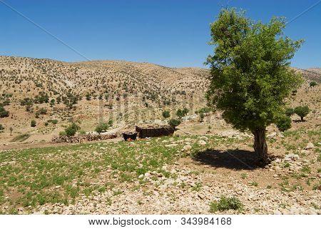 Yasuj, Iran - June 21, 2007: Bakhtiari Nomad Camp In The Mountains Near Yasuj, Iran. Some Bakhtiari