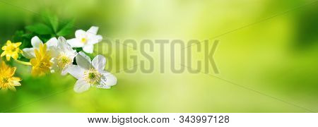 Nature View In Spring With Blurred Bright Green Landscape. White And Yellow Flowers In Garden. Sprin