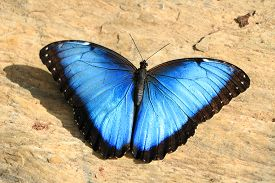 Blue With Black Butterfly On Floor, Close Up.