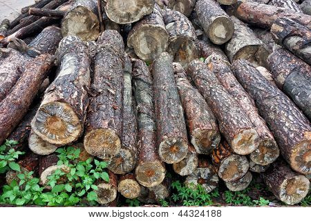 Pile of Timber Logs in wooden plant