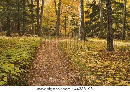 Path In The Autumn Woods Leading To A Bridge
