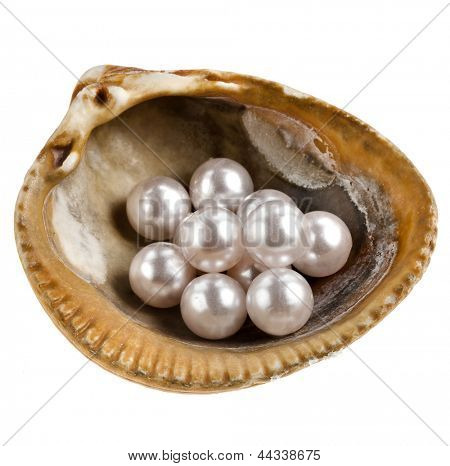 sea shell with lots pearls isolated on white background