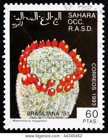 Postage Stamp Sahara 1993 Mammillaria Magallanni, Cactus