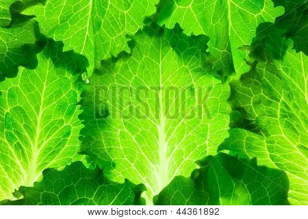 Healthy diet / Fresh Lettuce /  green leaves background poster