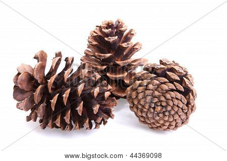 Three Fir Cones On A White