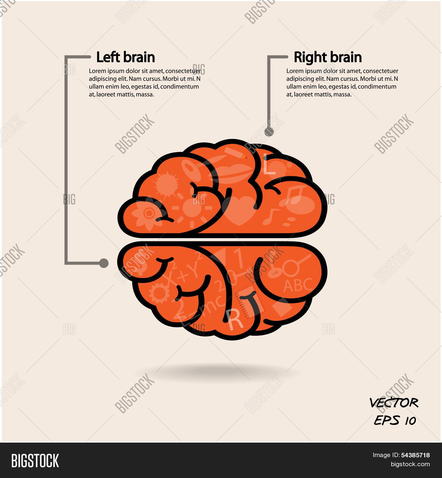 Left brain right brain symbol vector photo bigstock left brain and right brain symbolcreativity signbusiness symbolknowledge and education biocorpaavc Images