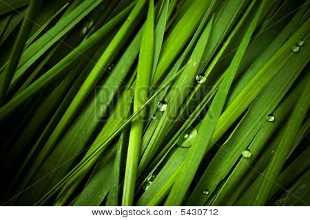 Grass With Droplets