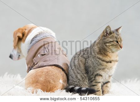 Cat and dog love