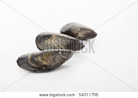 Raw Mussels Isolated Over White