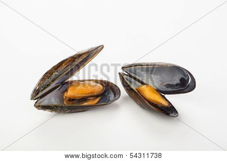 Coocked Mussels Isolated Over White