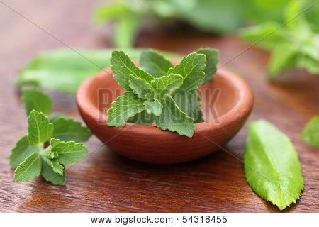 Stevia With Other Medicinal Herbs