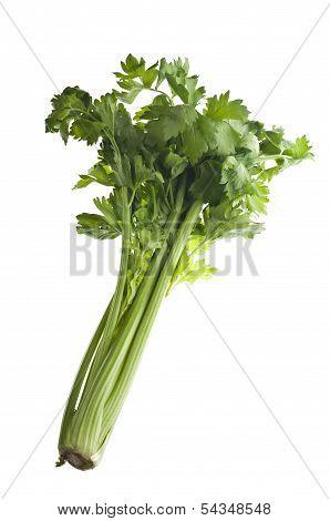 Stalk Of Celery