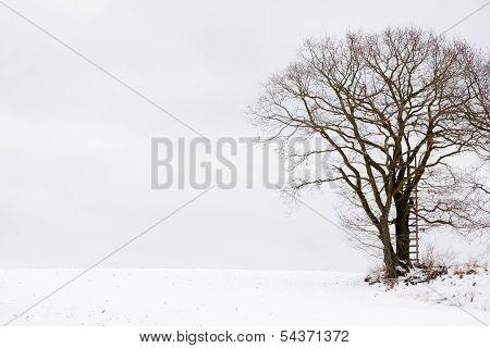 Hunting Oak Tree