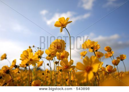 Beautiful Wild Flowers: Yellow 2
