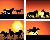 Set of horse silhouette on sunset background. Vector illustration. poster