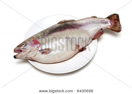 Row fish trout on plate on white background poster