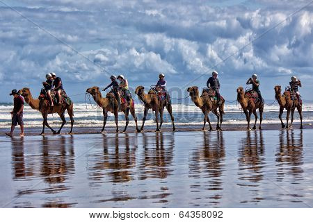Camel ride on Australian beach