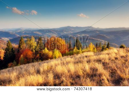 Majestic particolored forest with sunny beams. Natural park. Dramatic unusual scene. Red and yellow autumn leaves. Carpathians, Ukraine, Europe. Beauty world.