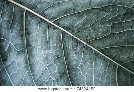Autumn tree leaf macro photo with selective focus and cold toned effect poster
