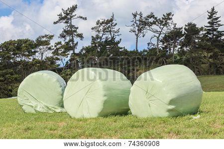 Bales Of Wrapped Silage In White Plastic At The Green Field In Summer.