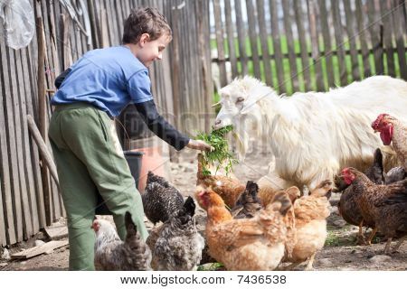 Country Boy Feeding The Animals