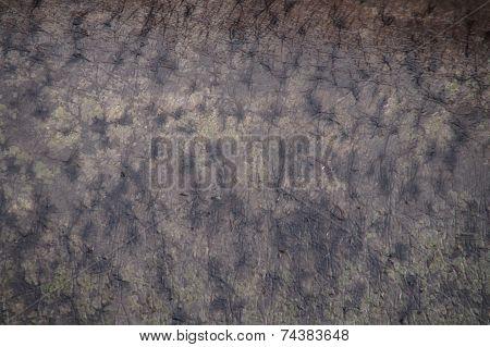 Hippo skin texture