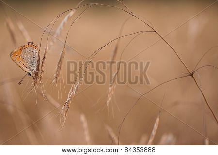 Gentle Butterfly On Grass