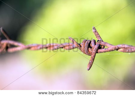 Close Up Rusty Barb Wire