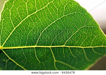 Green Leaf Against Sky