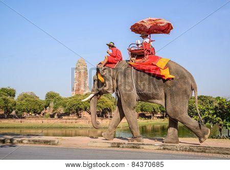 Ayuthaya Thailand-january 2 : Tourist Riding On Elephant Back Past Ancient Pagoda In Ayuthaya Famous