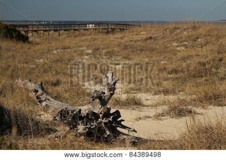 North Beach Dunes
